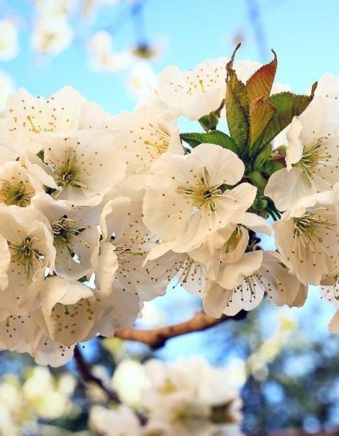 #A wie April, ahnungslos, achtsam & ausgeglichen